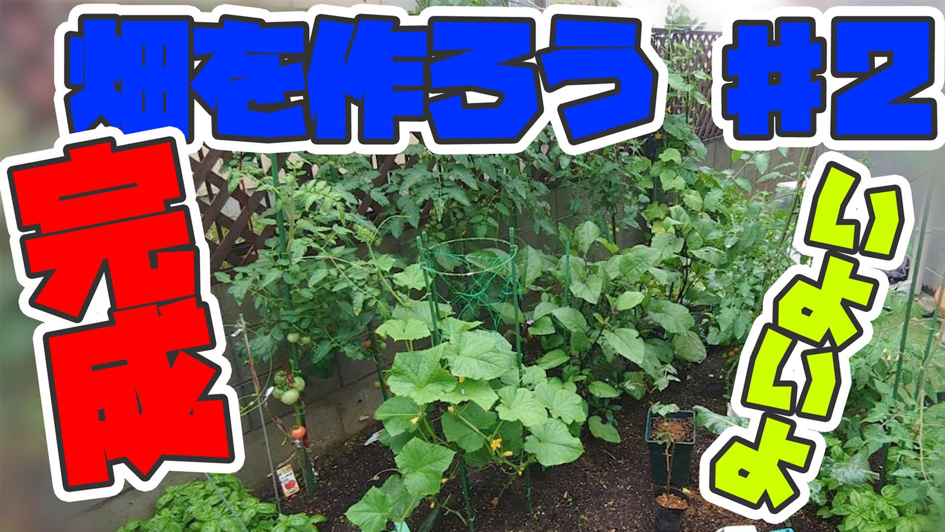 ♯2【DIY】家庭菜園をしよう!ふるいにかけられる人生について【植える】